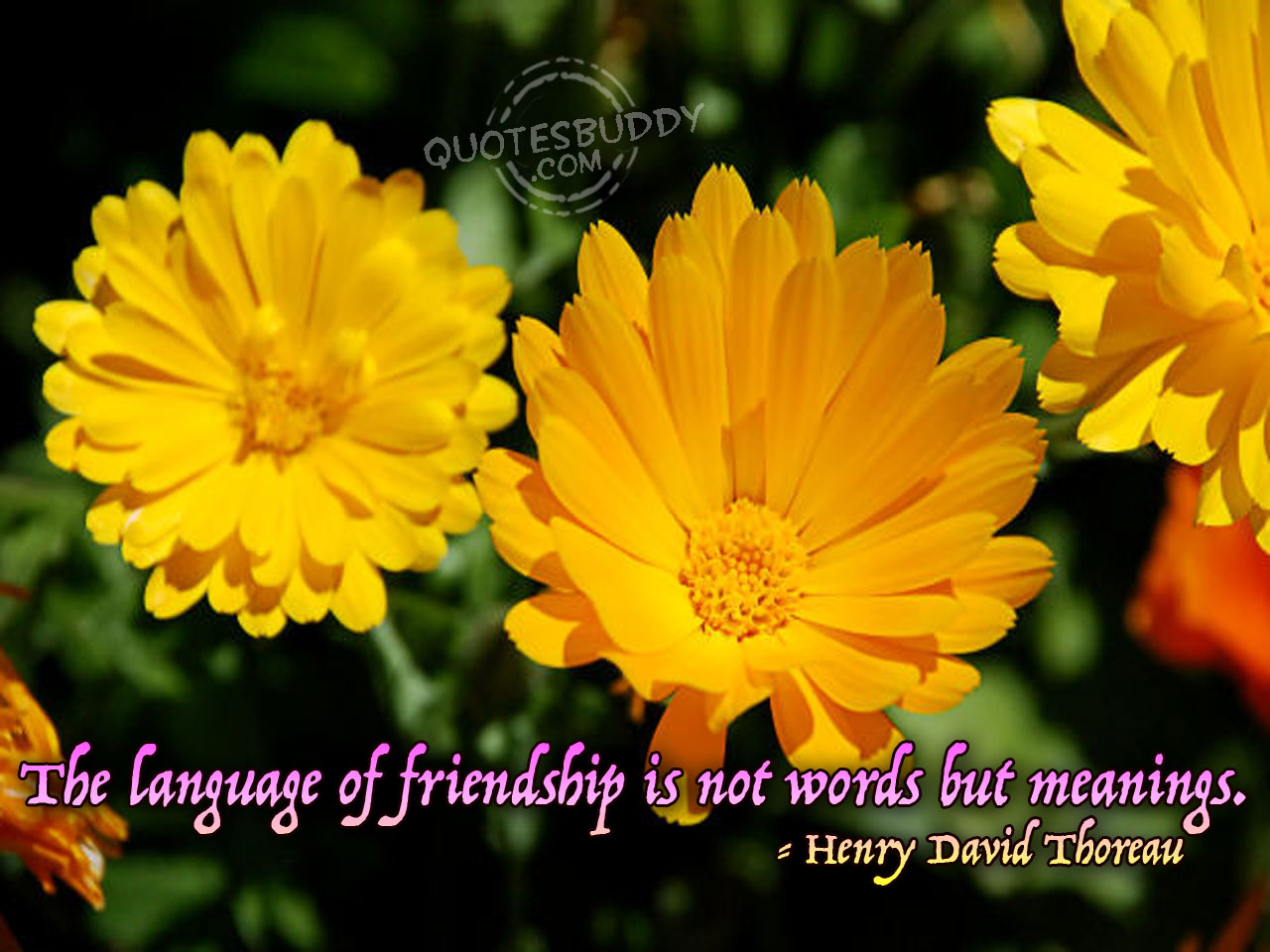 Friendship Day Scraps Friendship Day Greetings Friendship Day